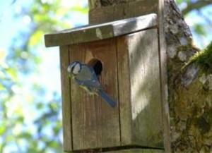 Kinderactiviteit: Vogelhuisje maken @ Informatiecentrum Renkums Beekdal | Renkum | Gelderland | Nederland